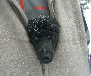 Dory riding in Kurt's vest during a hike too cold and snowy for her. She's ready for spring!