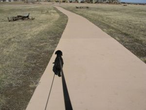 Dory walking with determination. She is undaunted by goals and free of perfectionism.