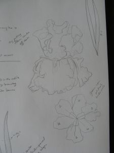 My notes on the entire flower.