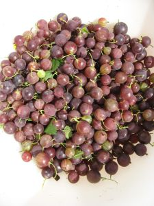 Gooseberries, in case you don't know what they look like.