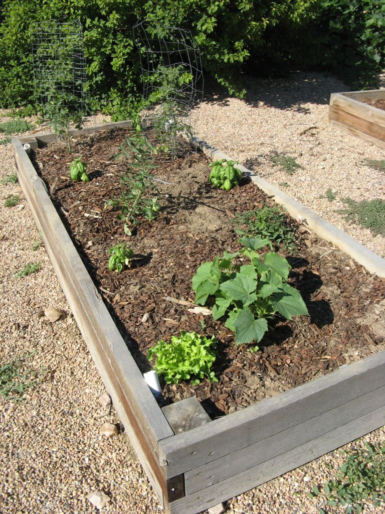 Instant garden! Thank God for nurseries.