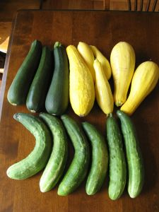 Zukes and cukes and squash! Oh my!
