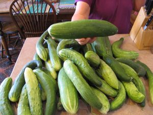 Part of our bounteous harvest