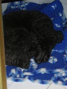 Dogs make sleeping look so EASY.