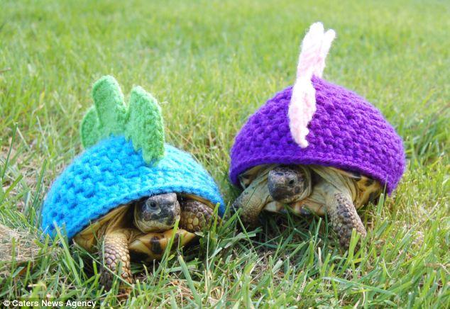 Katie Bradley's adorable Tortoise Cozies, dinosaur style