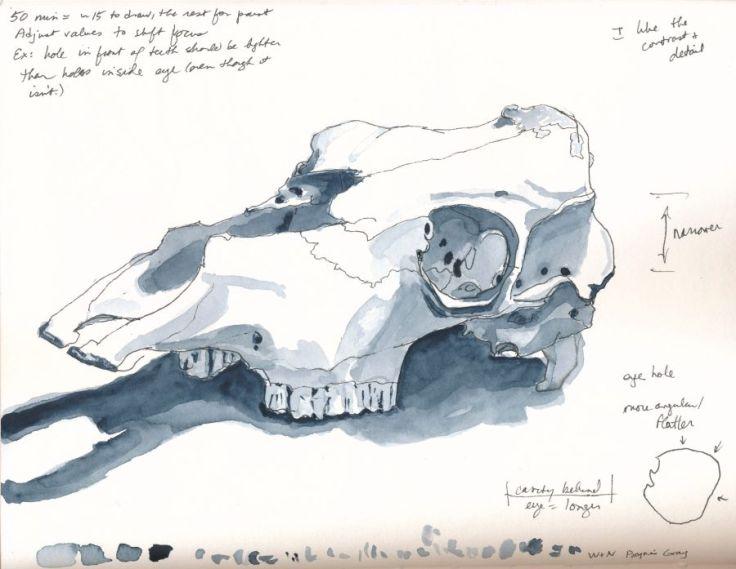 170604_skull_web